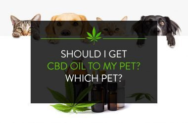 Should I give CBD Oil to my pet? Which Pet?