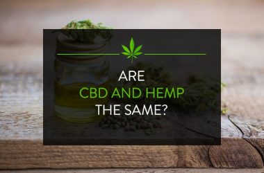 Hemp vs CBD: Important Differences to Know