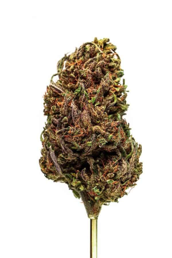 Sour Space Candy Strain Blue Ridge Selects Flower
