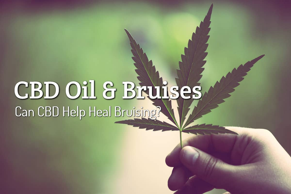 Is CBD Oil Good for Healing Bruises?