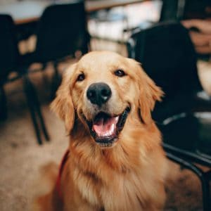 CBD Oil for Dogs: Getting Started