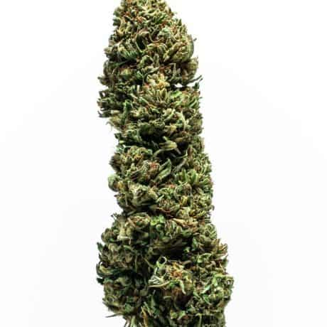 Special Sauce Strain Blue Ridge Selects Flower