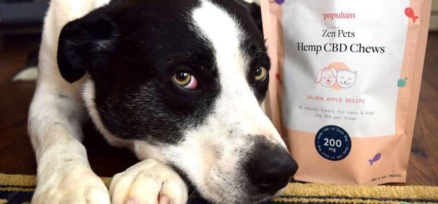 Populum Zen Pets CBD Chews