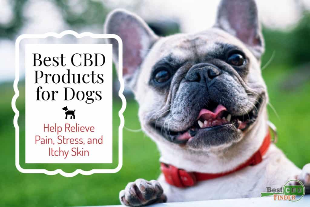 Best CBD Dog Products for Pain, Stress, and Itchy Skin Relief