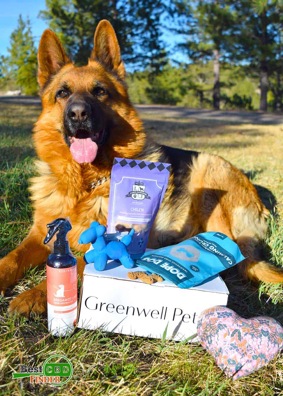Greenwell Pet Box Review: Unboxed