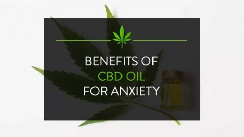 Benefits of CBD Oil for Anxiety